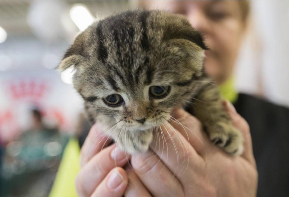Кота отдали в добрые руки, но что с ним сделали потом – никто не ожидал