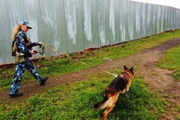 Служебная собака лишила осужденных приморцев сотовой связи