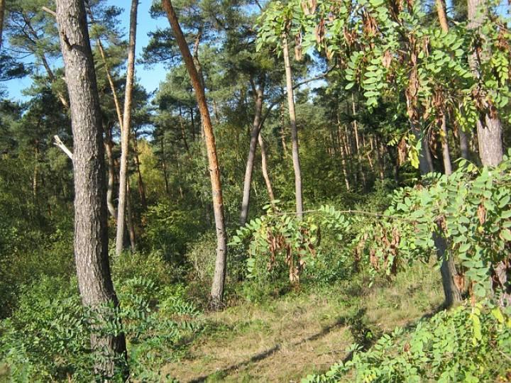 В Приморье продолжаются поиски пропавшей в лесу пенсионерки