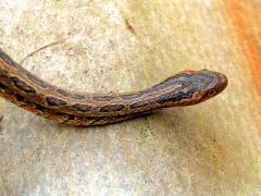 На детской площадке в Уссурийске обнаружили змею