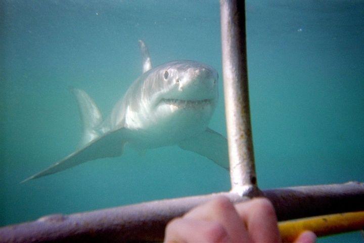 Названы места во Владивостоке, где может напасть акула