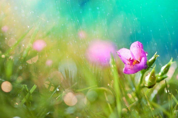Начало лета в Приморье будет теплым