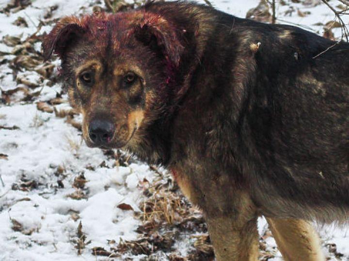 Город бессилен против бродячих собак