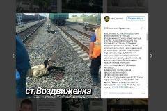 В Приморье женщина осталась без ноги после попытки пролезть под поездом