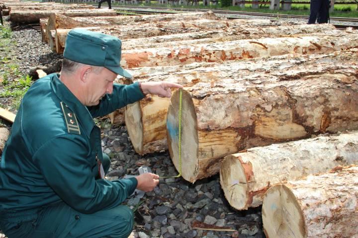 За контрабанду леса в отношении двух приморцев возбуждено 33 уголовных дела