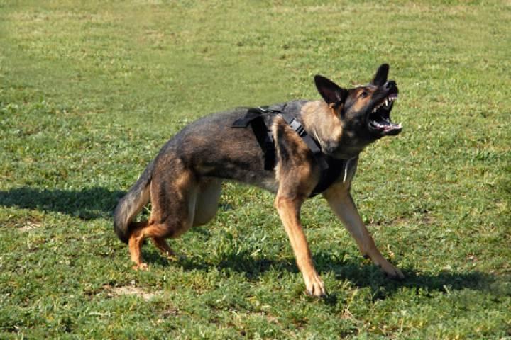 Пенсионерка из Владивостока пострадала в результате нападения бойцовских собак