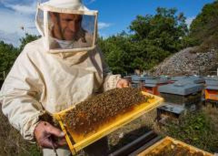 Ульи с пчелами похитили двое жителей Приморья