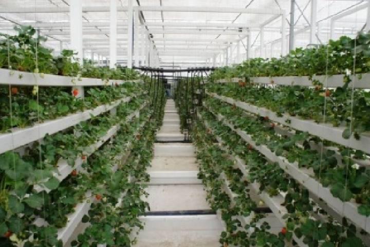 Новый резидент СПВ будет производить сжиженный газ и выращивать овощи