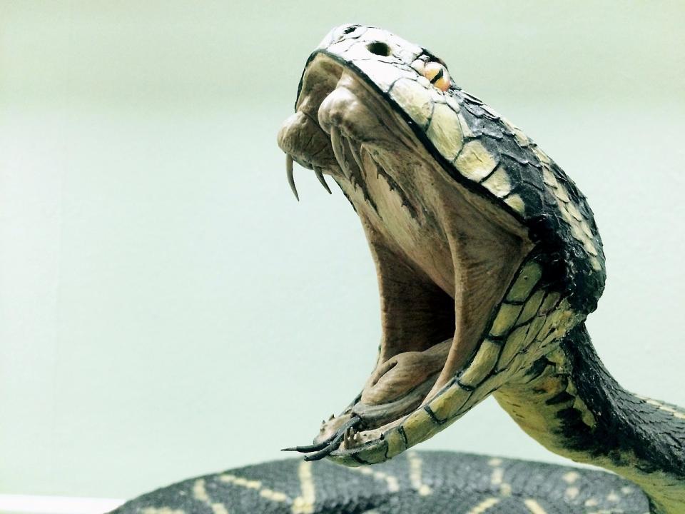 «Ого какая лошадь»: огромная змея напугала приморцев