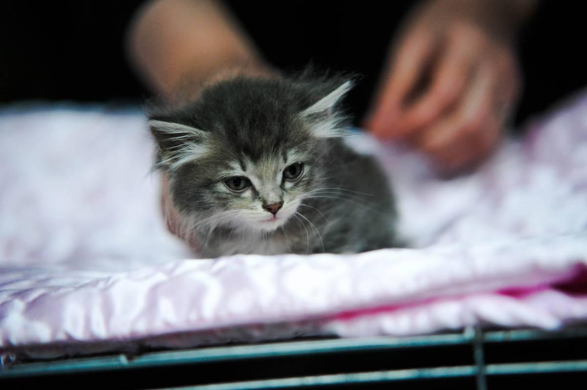 Во Владивостоке бесплатно раздали котят