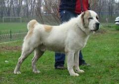 В Приморском крае собака загрызла 7-летнего ребенка