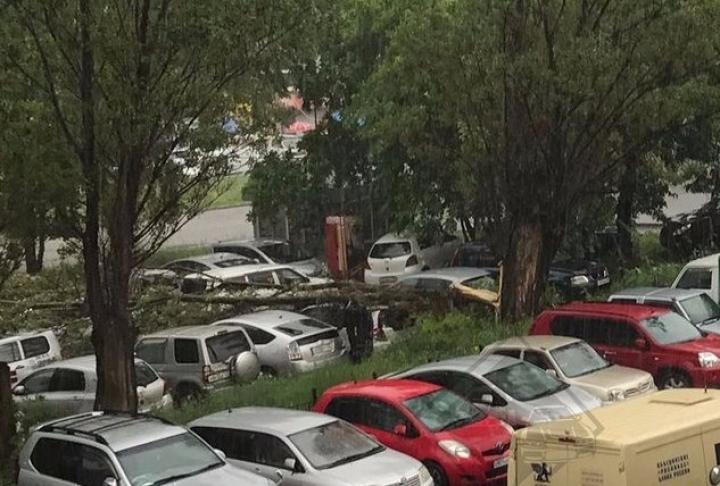 Из-за сильного ветра во Владивостоке на переполненную парковку упало дерево