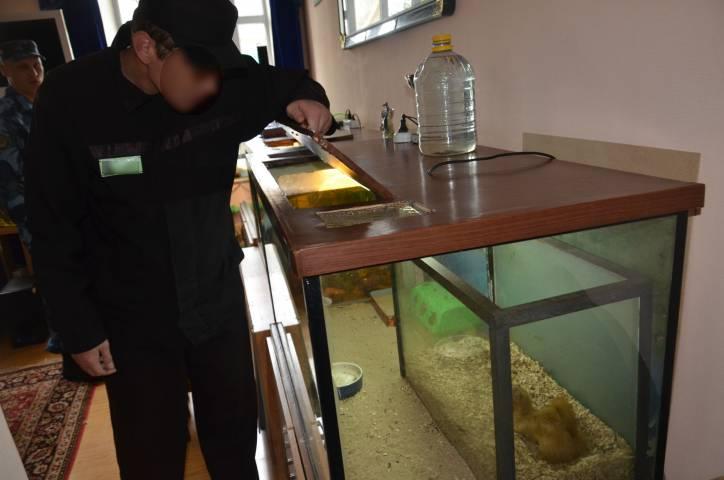 Контактный зоопарк в ИК-27 Приморья пополнился новыми обитателями