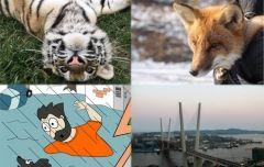 Позитив недели: домашние лисы, карикатура на дождь и тест про Владивосток
