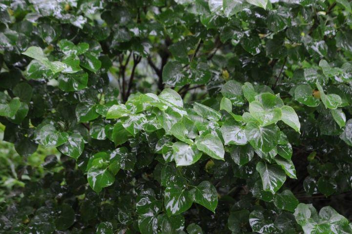 Кубай: «Начало лета в Приморье не совсем обычное»