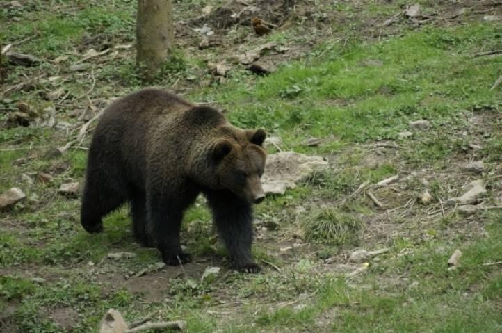 Полиция в Приморье застрелила медведя, представлявшего угрозу людям