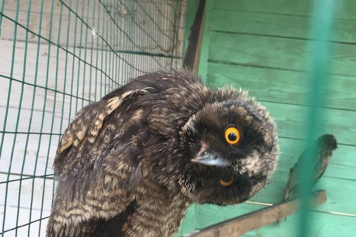 В зоопарке «Чудесный» живет танцующая сова