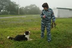 В Приморье полицейские собаки помогли раскрыть 158 преступлений