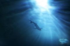 Опасности Японского моря: чего стоит остерегаться отдыхающим на пляжах Приморья