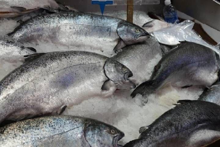 Вылов лосося на Дальнем Востоке вырос на 14%