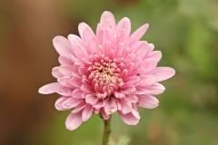 Россельхознадзор не пропустил в Приморье восемь партий зараженных цветов