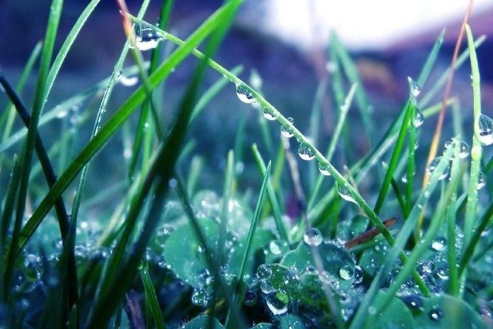 Приморцев ждут дождливые выходные