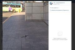 Змея напугала горожан недалеко от здания мэрии Владивостока
