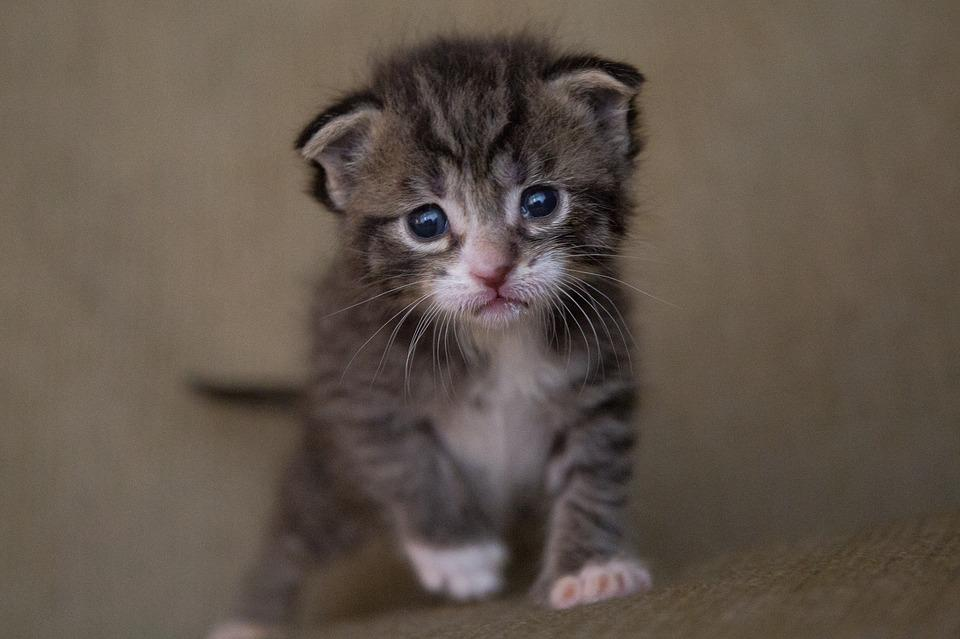 Неравнодушные жители Владивостока, спасая котенка, сообщили данные автомобиля без сигнализации