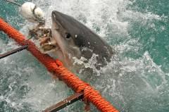 «Ну какие акулы! Я вас умоляю!» – турбазы Приморья не хотят ставить сетки