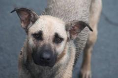 В Приморье живодеры расстреляли собаку средь бела дня