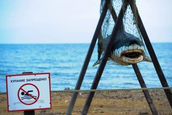 Турбаза в Приморье оригинально защитила отдыхающих от акул