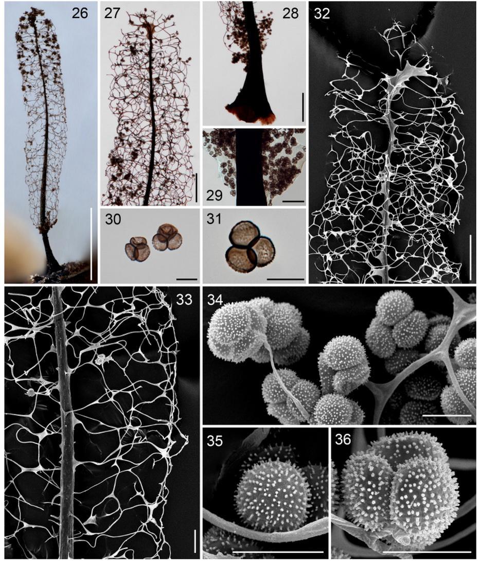 Уникальные «грибы-животные» обнаружены в Приморье на «Земле леопарда»