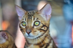 Во Владивостоке кот перегородил дорогу