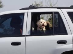 Автомобилистов с домашними животными ждет новый запрет