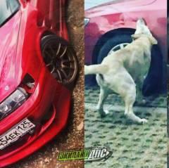 Собаки снова погрызли автомобиль во Владивостоке