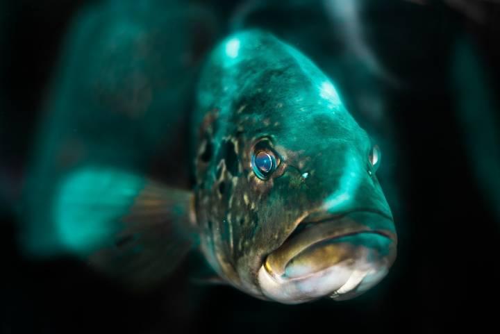 В Приморье по дорогам сегодня плавают не только автомобилисты, нои рыбы