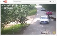 Тигр напал на посетителей парка дикой природы в Пекине