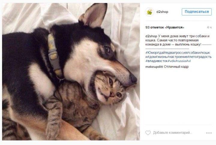 Владивосток в Instagram: много котиков, суровые обнимашки и головокружительное падение