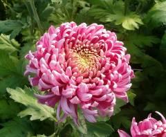 Шесть партий зараженных цветов попали в Приморье