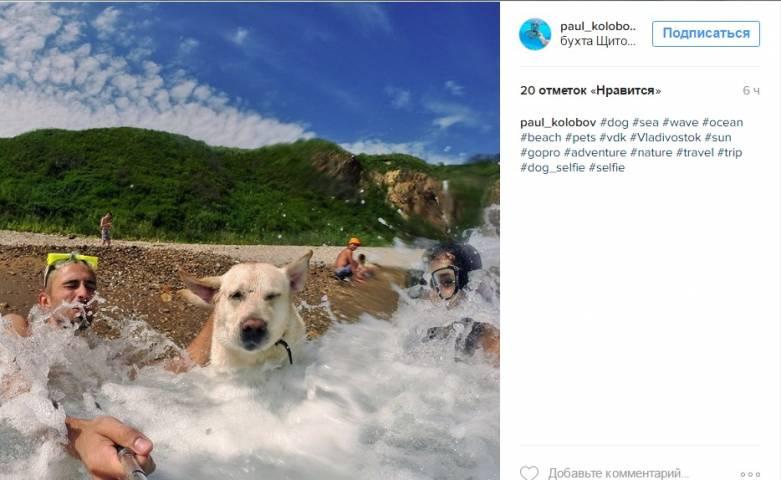 Владивосток в Instagram: мотивирующая картинка, неподдельные эмоции и кошка прямиком из ада