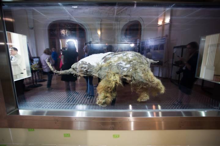 Ученые Дальнего Востока начали процесс клонирования мамонта
