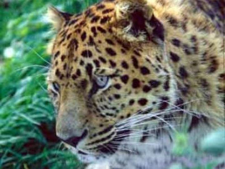 10 главных животных Приморья