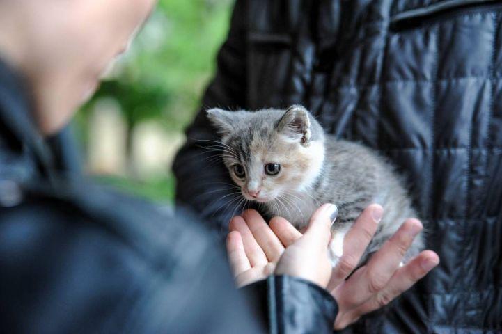 Сходить бесплатно: День ВМФ, выставка котят и кино для взрослых