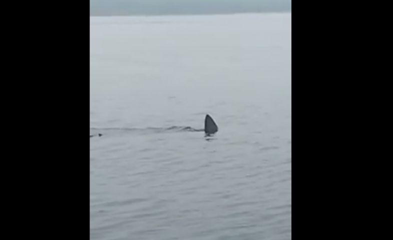 Крупная акула замечена на популярном пляже Приморья