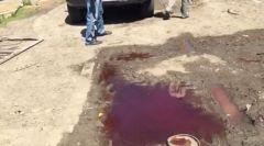 Дачный поселок в Приморье утонул в крови и останках забитых свиней