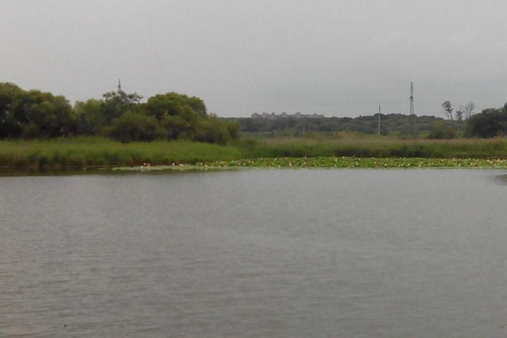 Уникальное лотосовое озеро могут засыпать в Приморье