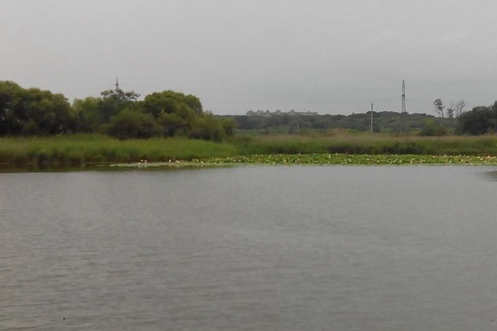 Озеро лотосов не уничтожат, но уменьшат площадь на треть – власти Уссурийска