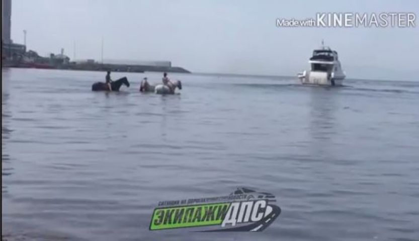 Купание лошадей на популярном пляже Владивостока возмутило горожан