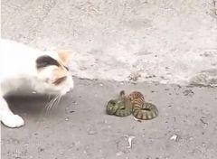Коты вступили в «схватку» со змеей во дворе жилого дома в Приморье