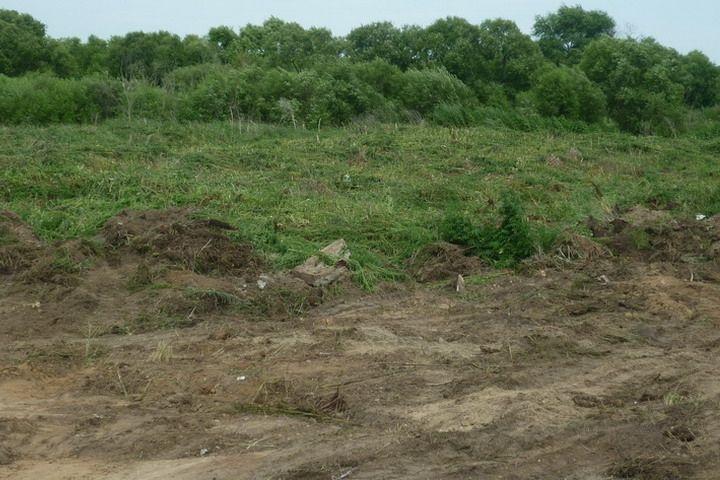 В Приморье уничтожили заросшую коноплей поляну площадью два гектара